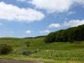 Flores et paysages - GAEC du Bois Joli - Producteur de Saint-Nectaire fermier