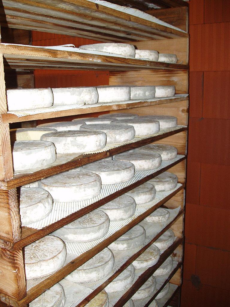 Fromage AOP Saint-Nectaire - GAEC du Bois Joli - Producteur de Saint-Nectaire fermier
