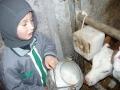 Vaches et veaux - GAEC du Bois Joli - producteur de Saint-Nectaire fermier