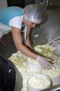 Producteur de Saint-Nectaire fermier - fabrication du saint-nectaire : mise en moules